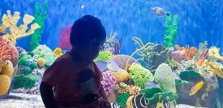 Rio com Crianças – AquaRio