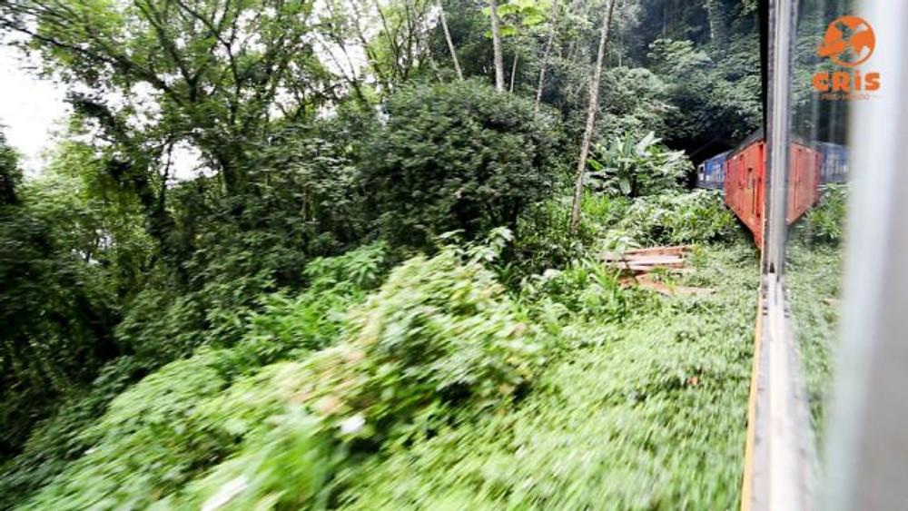 Passeio de trem de curitiba até morretes crisstilben crispelomundo (3)