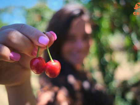Fundão e as cerejas portuguesas – Uma delícia com certeza