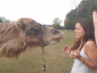 Zoo Lujan Buenos Aires Argentina Beijando Dromedário