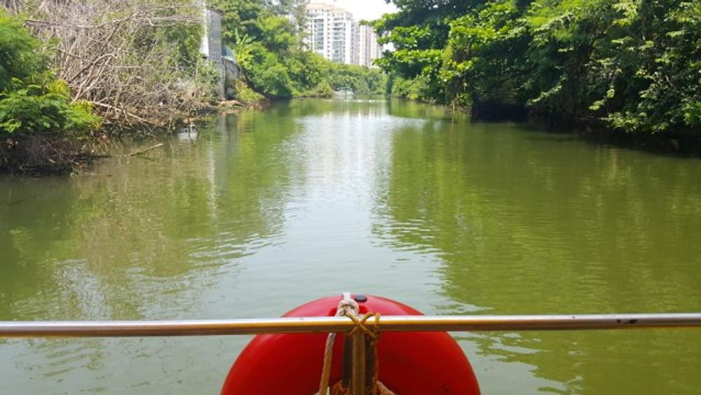 bws pantanal carioca crisstilben cris pelo mundo cris cris (10)