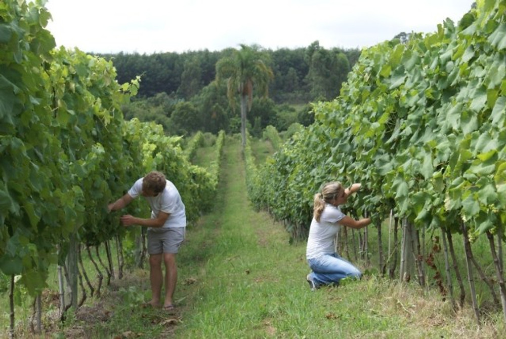 Lídio carraro vinhos olimpíadas
