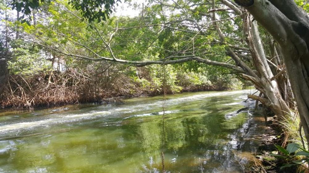 bws pantanal carioca crisstilben cris pelo mundo cris cris (7)