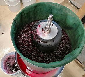 Pressage myrtilles - vin de goutte