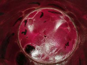 Début de fermentation Myrtille-1.jpg