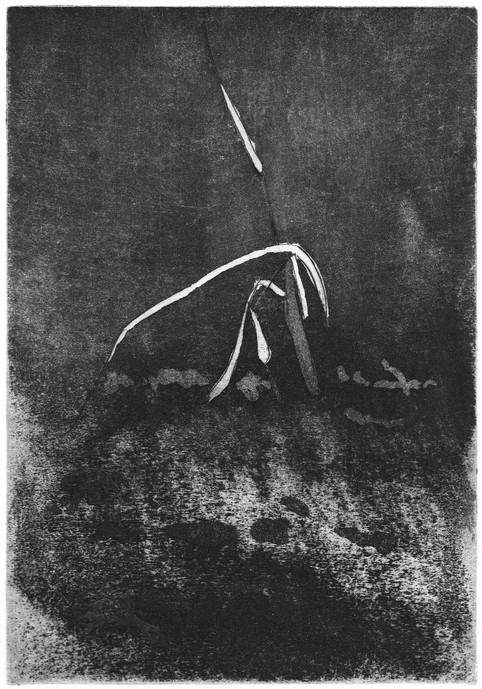 Buchillustration, 4