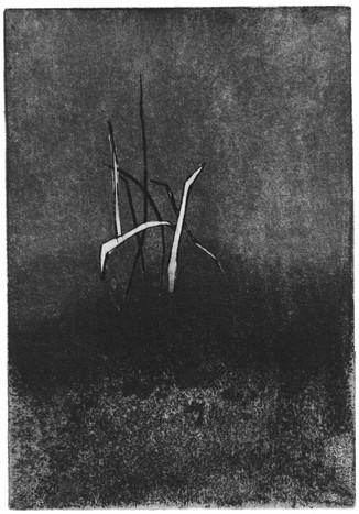 Buchillustration, 8