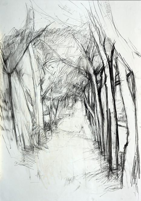 Paliano Allee 2014, 60x80 cm
