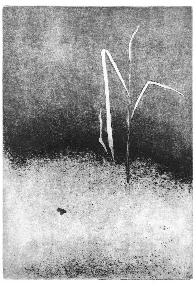 Buchillustration, 3
