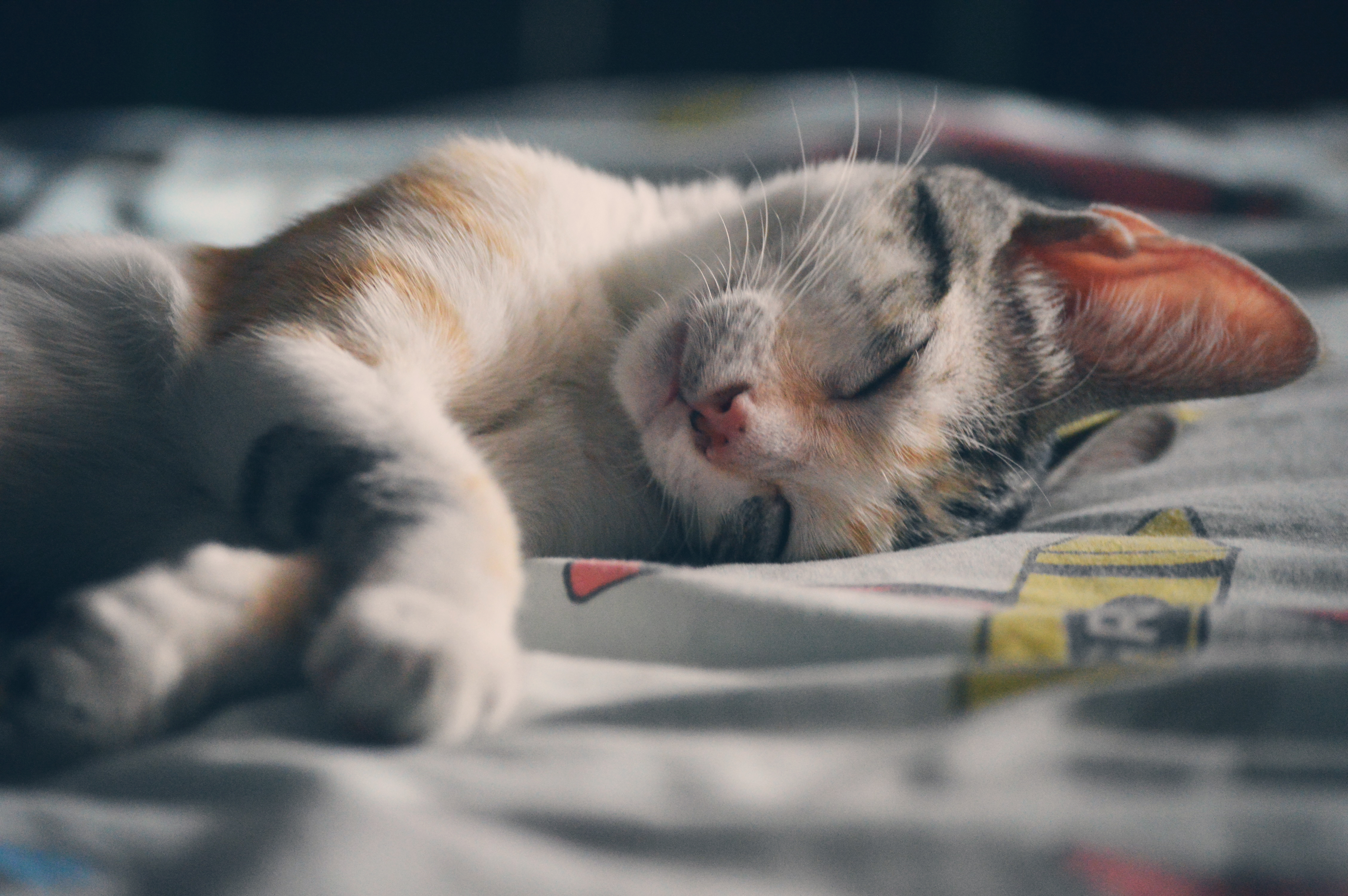 Katzenpension happy cat