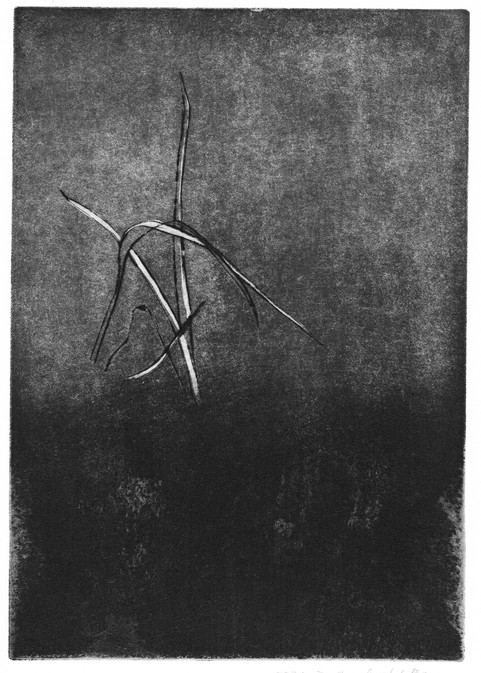 Buchillustration, 2