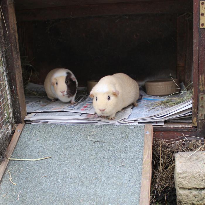 Muffin & Caoimhe