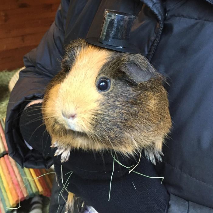 Guinea Hog Day 2018