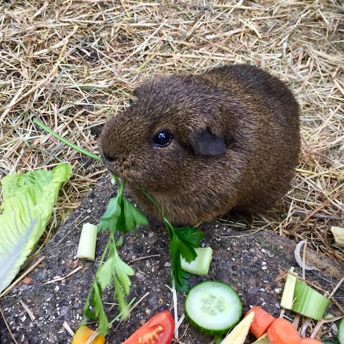 Rio, parsley enthusiast