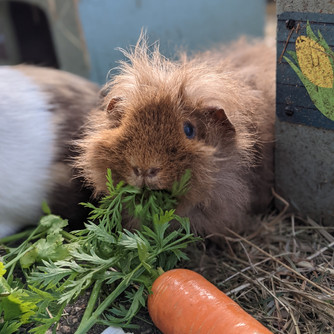 Gingy and her carrot leaves