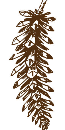 pine-cone-297679_1280.png