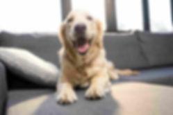 Dog on Clean Sofa