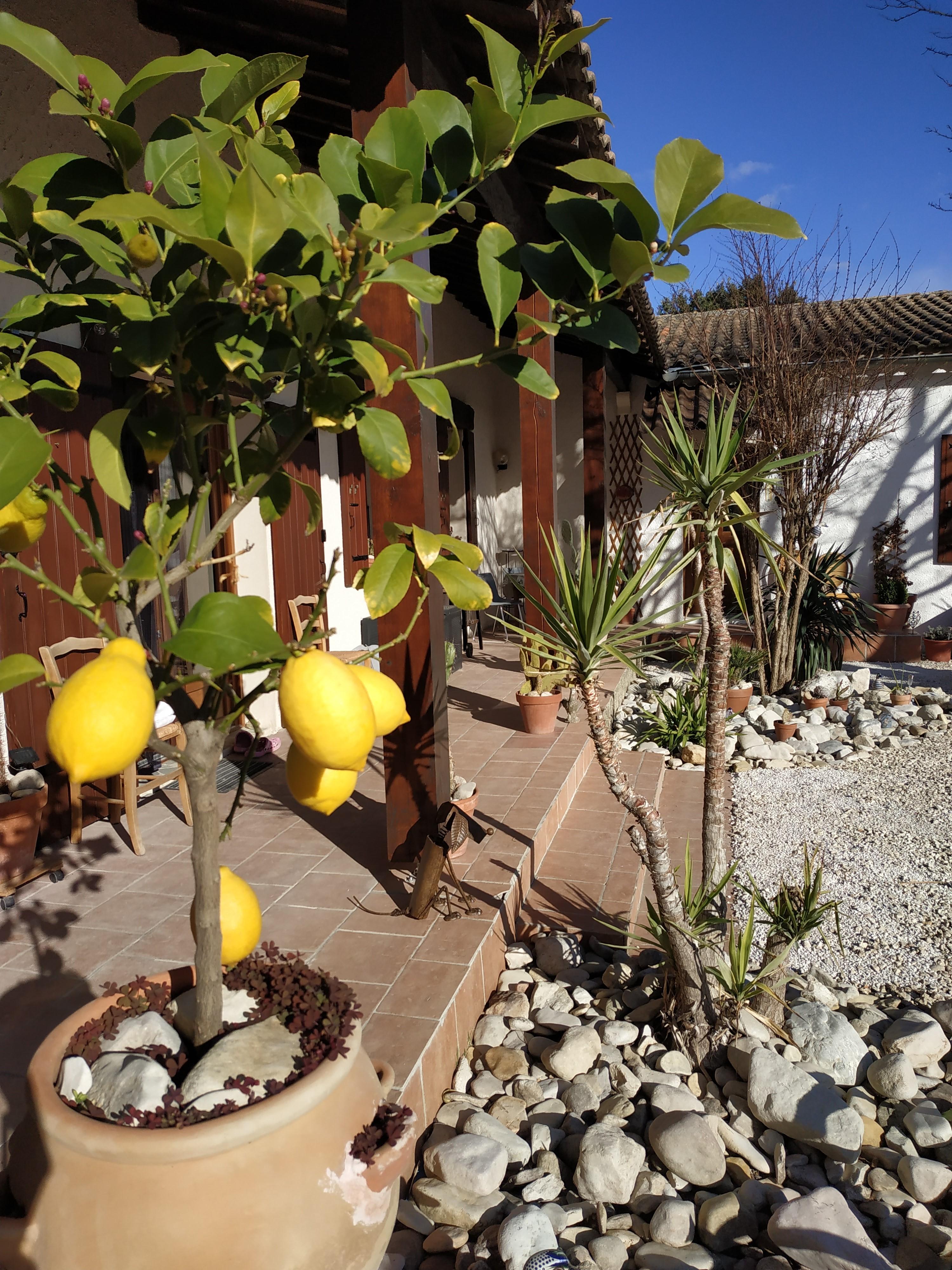 Garden and hacienda