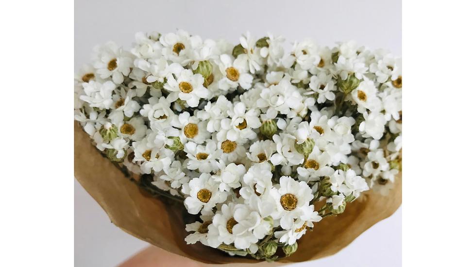 Dried Daisy Bouquet - Midi