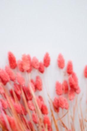 wild iris workshop 1500px 4.JPG