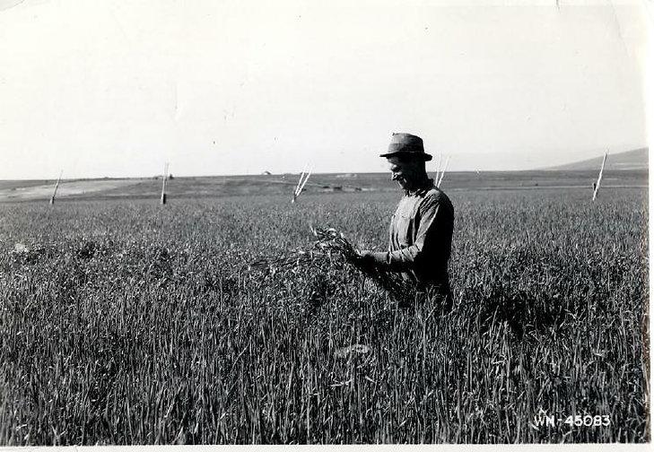 Grass harvest.jpg