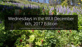 WednesdayWUI-4.jpg