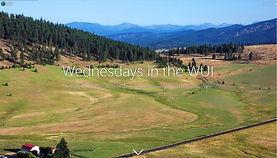WednesdayWUI.jpg