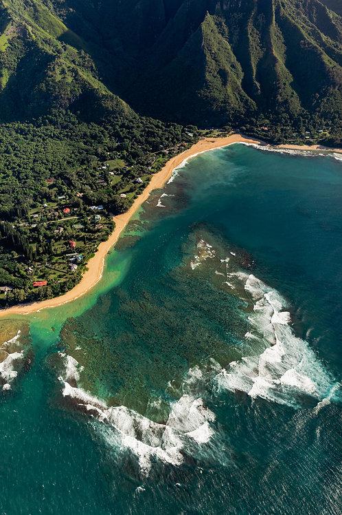 Coral of Kaua'i