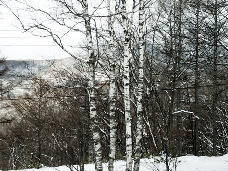 蓼科高原日記/連休空室あります。2月の気候になってきました。