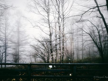 春の霧 野鳥の声 桜咲く 新緑のタテシナ
