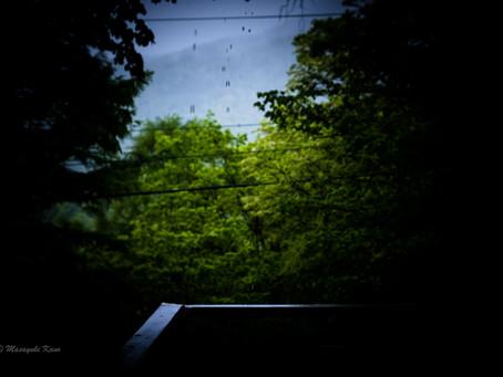 蓼科高原 きょうも静寂 雨の森