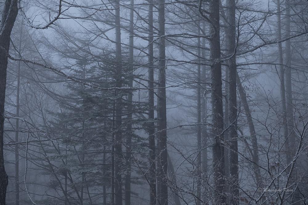 蓼科高原標高1700メートル、今日のラウンジからの眺め。