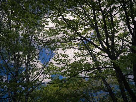 蓼科高原日記/美しい森で