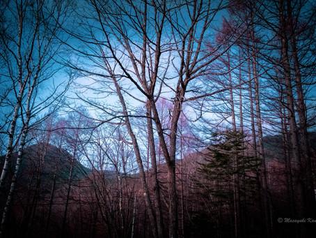 霜が降りてキラキラ光っている蓼科高原