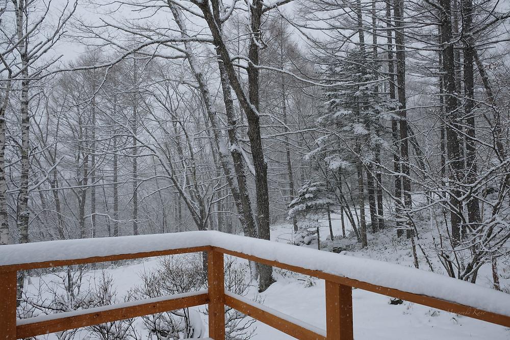 一面の雪景色/蓼科高原標高1700メートル