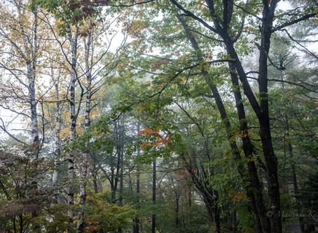 紅葉が始まりました。白駒池はすでにピークです。