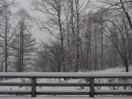 またまた雪が降りました