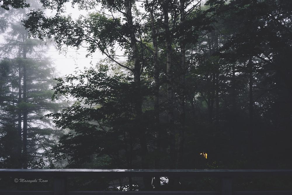 雨の朝の目覚めは静寂と安寧に満ちている|蓼科高原ペンション・サンセット|夏