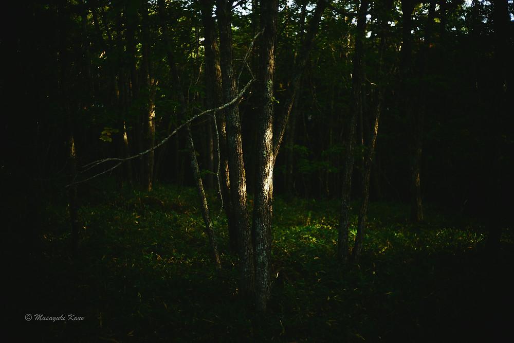 真横から射し込む秋の光、高原ならではの風景です。蓼科高原ペンション・サンセット