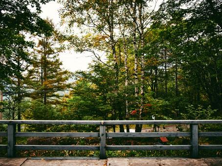 色づく標高1700メートルの森 蓼科高原
