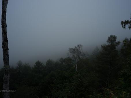 蓼科高原日記/Misty Forest