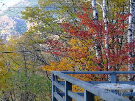 紅葉真っ盛り。特に横谷観音がおすすめ!