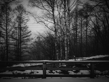 雪が降り始めました #蓼科高原