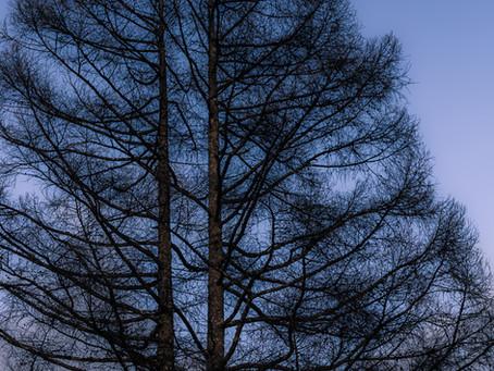 並び立つ樹