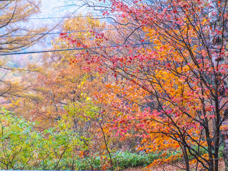観音平や御射鹿池あたりは紅葉が見ごろ