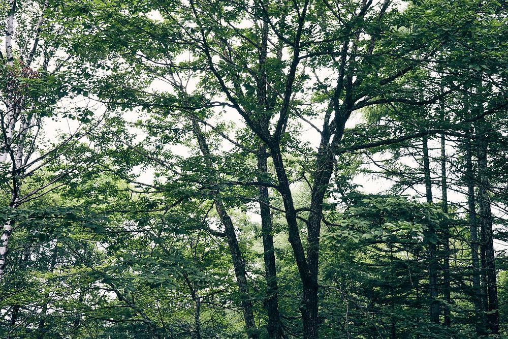 不安定ながらおおむね晴れ時々曇りの蓼科高原の今日でした。