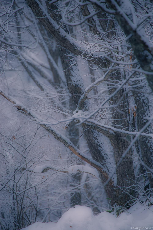 吹雪 蓼科高原