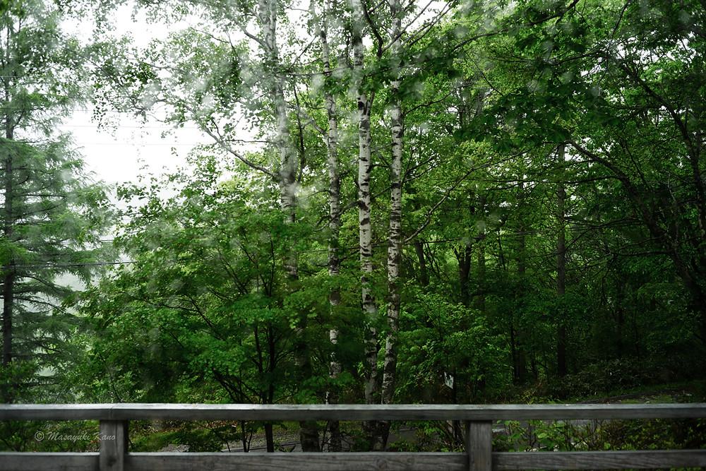蓼科高原は雨です。きょうのラウンジからの風景。