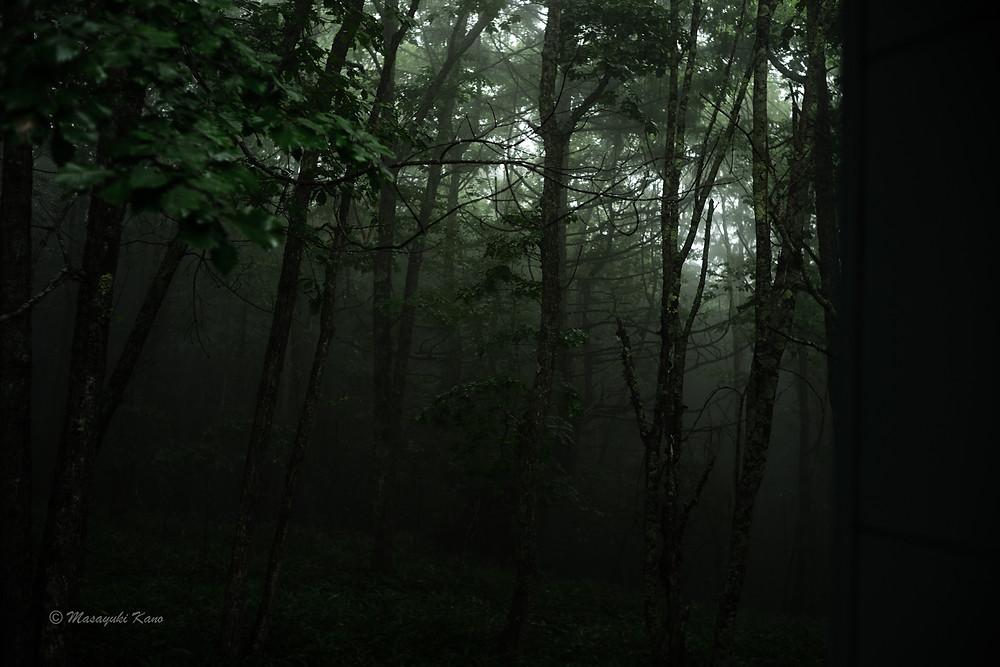 雨の夜明け ペンション・サンセットの裏の森 客室の窓から