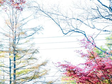 2020/10/18 紅葉真っ盛りです。蓼科高原。